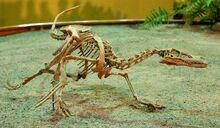 ヴェロ 化石.jpg