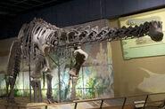 ハプロカント 化石