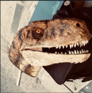 New raptor