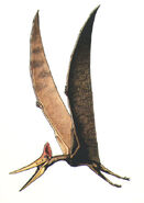 Pteranodon r t w