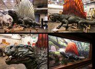 Dimetrodon jwfk