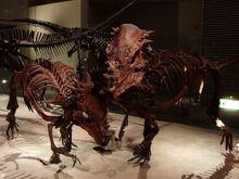 パキケ 化石2.jpg