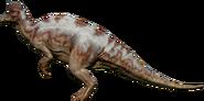 CoryRainforest render