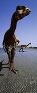 Dilophosaurus Csotonyi2