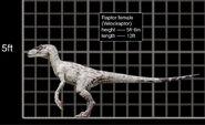 Velociraptor female comparacion
