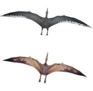 Ptero dimorphism