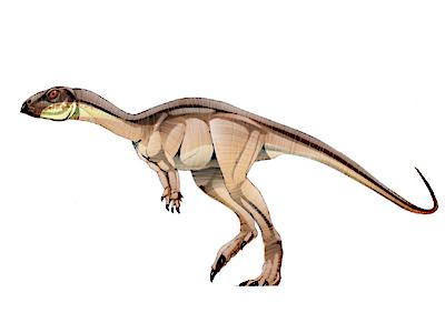 Nanosaurus