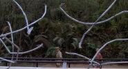 La Clôture des Raptors est endommagée (1)