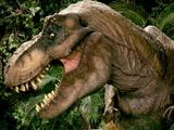 Tyrannosaure Femelle