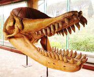 リヴィアタン 化石