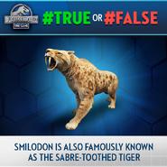 Smilodon TF