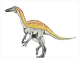 Shuvosaurus