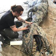 Teratophoneus Carcass 2 with Artist