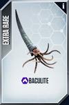 Baculites