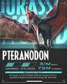 PteranodonJurassicBattles