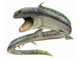 Orthacanthus