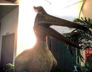 Pteranodon tlwjp