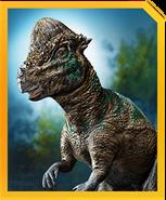 Pachycephalosaurus-min