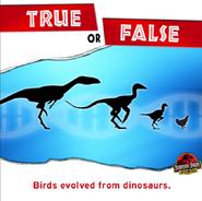 True and False Birds evolved from dinosaurs