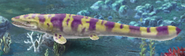 Jurassic-Park-Builder-Hainosaurus-Evolution-3-Adult