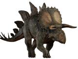 ステゴケラトプス