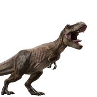 Tyrannosaurus Rex Jurassic Park Wiki Fandom Los investigadores también piensan que se le puede atribuir el título de eslabón perdido entre los dinosaurios herbívoros y los terópodos. tyrannosaurus rex jurassic park wiki