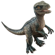 Raptor Dd6x14y-e8783048-9f8d-4eb6-983a-76f7f5ee8f90