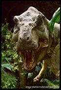 Rex tlw2
