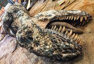 Teratophoneus Carcass