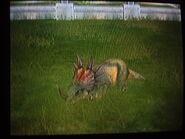 Styracosaurus sleeping