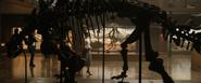Ankylosaur Skeleton Full