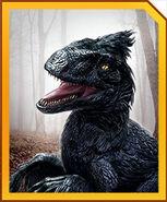 Dakotaraptor ec17af773e677619458abcdd174f1f604249febf