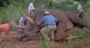 Triceratops jp