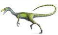 Compsoghnathus image medium
