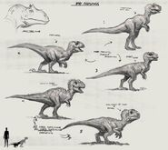 JW Camp Cretaceous Bumpy Baby Allosaurus Sketches