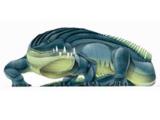 Rutiodon
