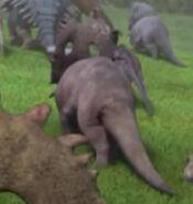 Grey sinoceratops