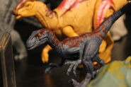 Primal Attack Attack Park Velociraptor