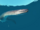アテンボロサウルス