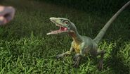 Compsognathus about to attack Tiffany