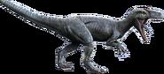 JuvenileAllosaurus