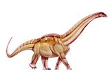 Titanosaurus