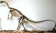 プラテオサウルス 化石