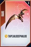 Tapejalocephalus