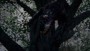 S rex in tree