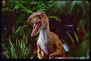 Raptor tlw2
