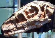 リオハサウルス 化石