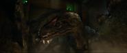 Allosaurus Gas4