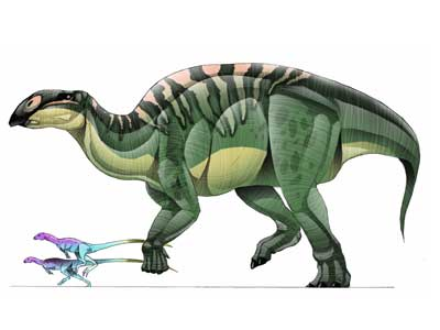 Brachylophosaurus