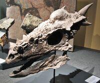 スティギ 化石.jpg